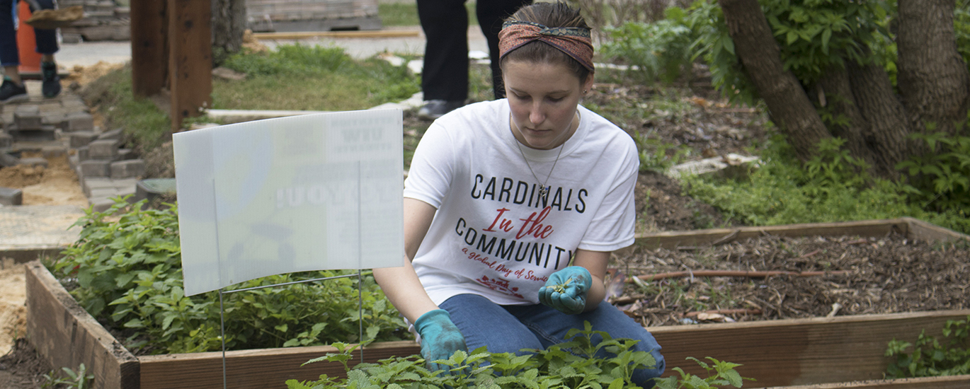 UIW Student engaging in community service project in a garden
